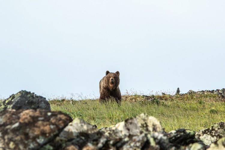 Медведь был всего в 15 метрах от путешественника