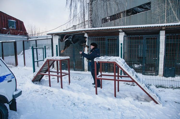 Иногда бывает и такое, что Эльмира забирает Василису домой. Но только с разрешения руководства. Фото: Сергей Грачев