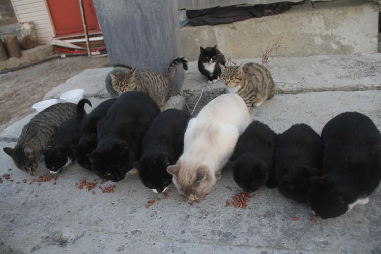 В мгновение 4 кота превратились в 12