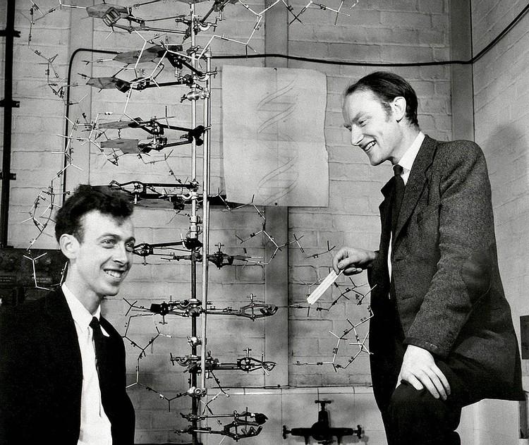 Ученые Фрэнсис Крик и Джеймс Уотсон в 1953 году. Фото: EAST NEWS