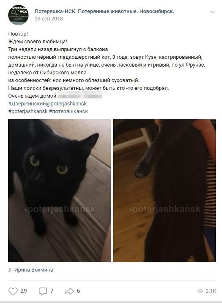 Ирина три месяца искала любимого кота.