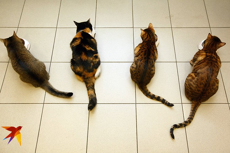 А еще кошки не любят, когда вы требуете доесть несвежие консервы