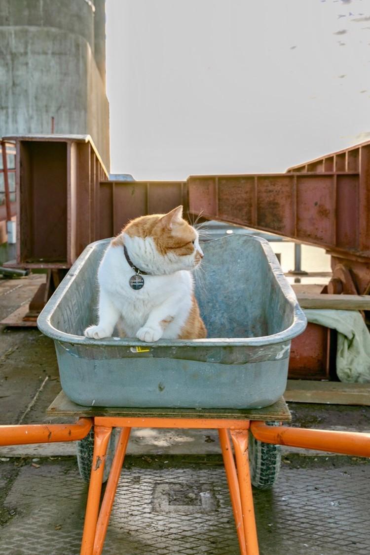 Коты тачек не боятся. Фото: Кот Моста/VK