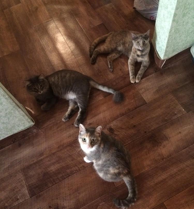 Все три питомца до того события, перевернувшего их жизнь. Фото Татьяны Котовой