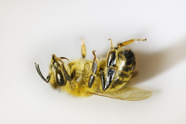 Глобальное потепление стало причиной уменьшения популяции пчел, что грозит падением урожайности.