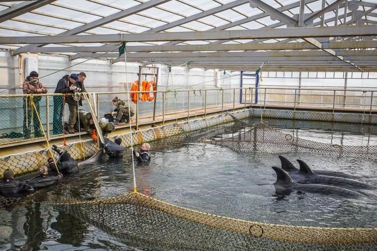 """В """"китовой тюрьме"""" недавно закончила работу группа российских ученых, теперь мормлеками займутся иностранцы. Фото: Глеб Ильинский"""