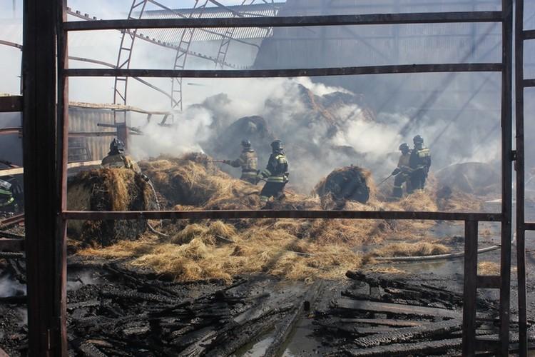 Тушили пожар 48 человек и 12 единиц техники
