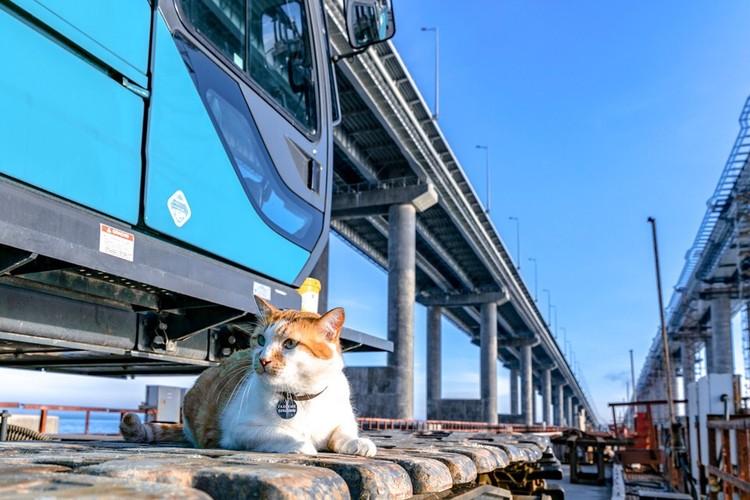 Многоуровневые развязки - это параллели. Фото: кот Моста/VK