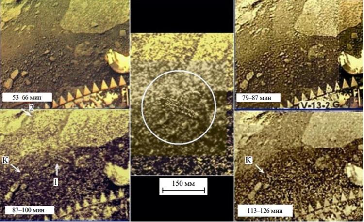 Скорпион, который то появляется, то исчезает из поля зрения.