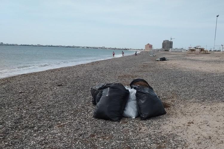 Ранних купальщиков встречают мешки с водорослями во всей береговой линии