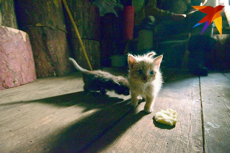И у Агафьи, и у Георгия живут кошки. Они, в отличие от хозяев, между собой дружат