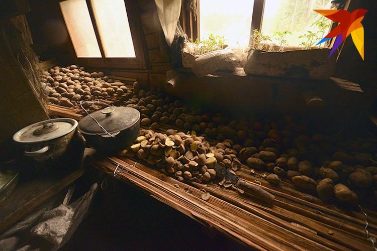 Картошка, отобранная на посадку: каждый из отшельников обихаживает свой огород