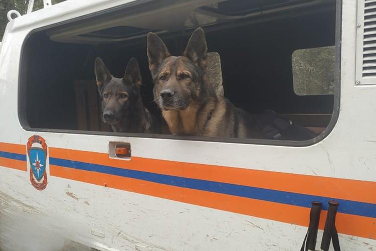 Собаки, которые помогали в поисках. Фото: предоставлено спасателями
