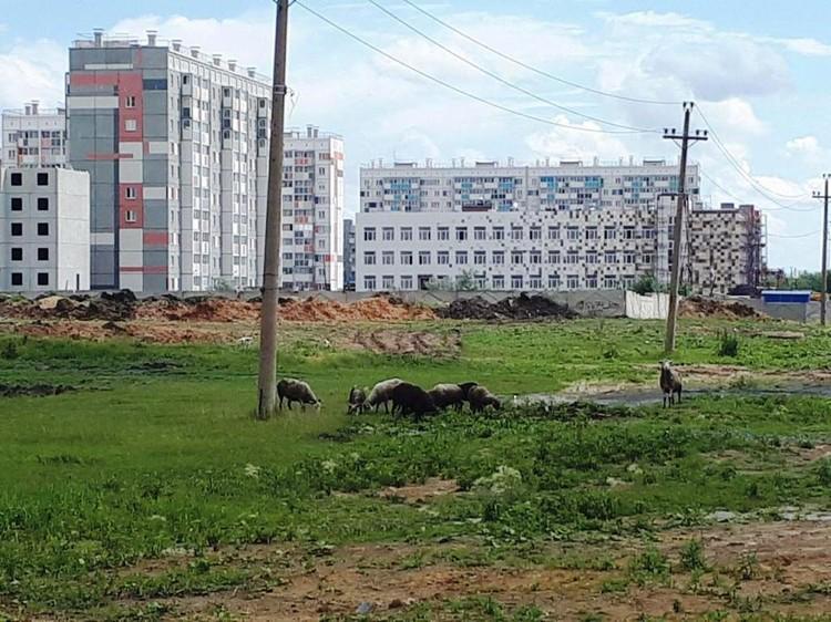 На заднем плане - новая школа в Чурилово. До нее надо как-то еще добраться по грязи. Фото: Е-область