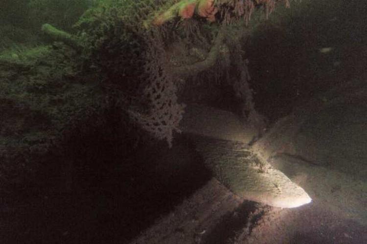 Предположительно баржа была затоплена в начале XX века.