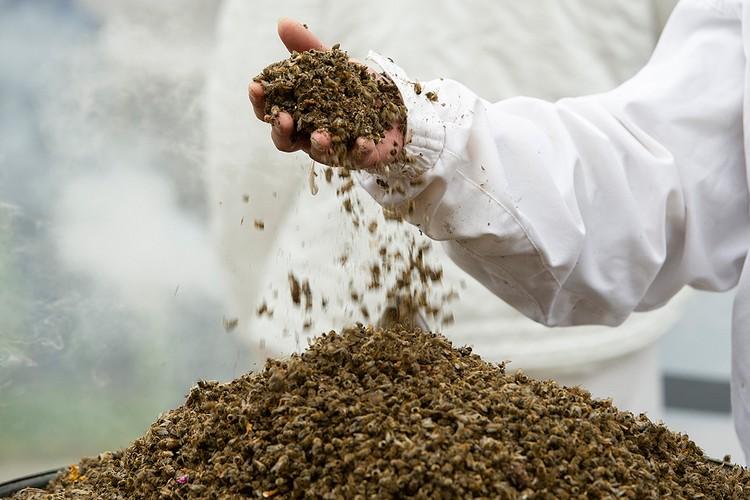 Согласно информационным сводкам, мор охватил пчел сразу в десятках регионах нашей страны.