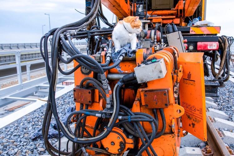 Кот изучает рельсосварочную машину. Фото: Кот Моста/VK