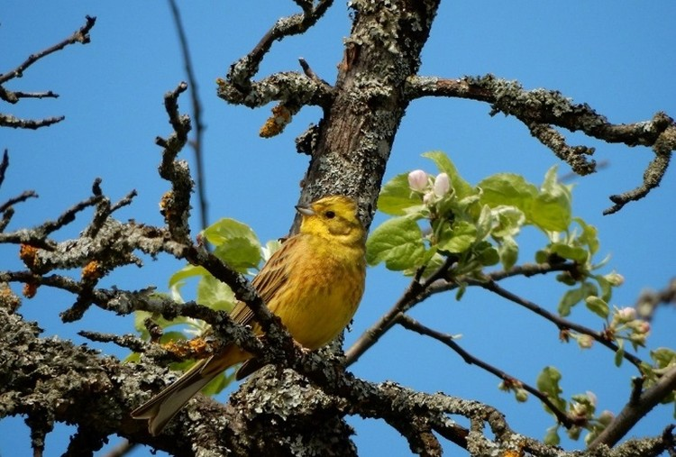 Фото: rdeysky.org. Крылатых жителей можно встретить в заповедных лесах Новгородской области.