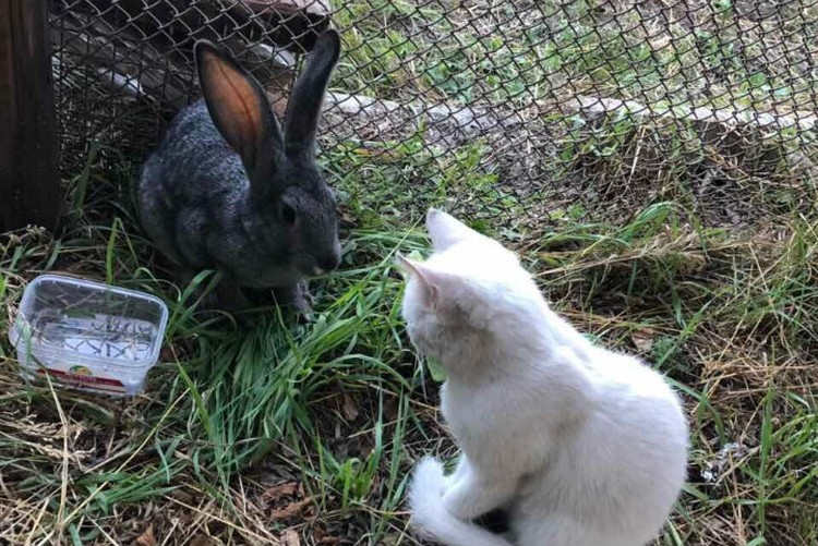 Крольчиха Тулуша и один из спасенных котят пока живут на базе спасателей в Тулуне, но скоро поедут с ними в Красноярск