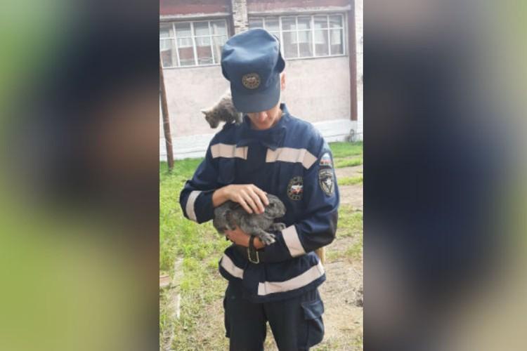 Курсанты МЧС с радостью приютили спасенных в Тулуне домашних животных