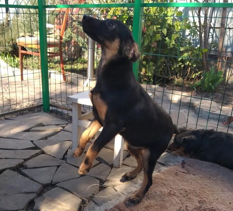 Сейчас Рома живет в частном доме в вольере с другими собаками, которые ищут дом.