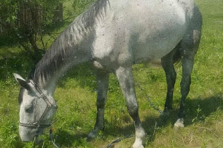 """Один из пропавших коней - Пассинг. Фото: аккаунт АНО АЦОВЕ """"Конный мир"""" в соцсетях."""