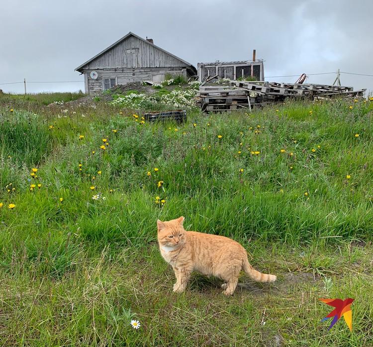 Сторожевой кот.