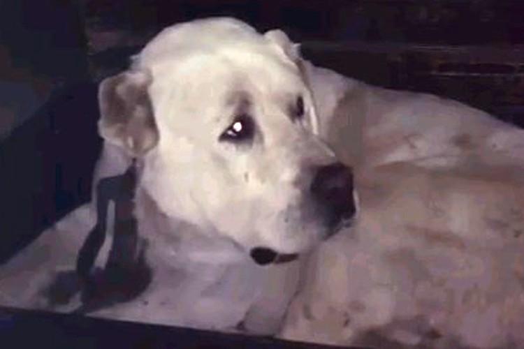 Сейчас пес находится в приюте, за ним присматривают врачи.