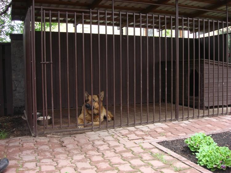 Кто-то выпустил собак из вольера раньше времени.