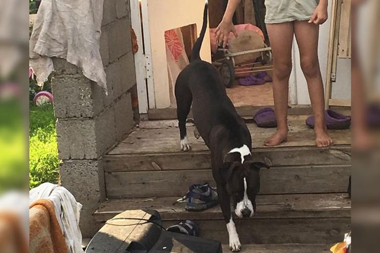 Хозяева собаки не принесли извинений