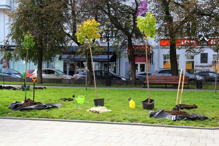 Чиновники, журналисты и экологи высадили деревья в новом сквере имени Евстигнеева