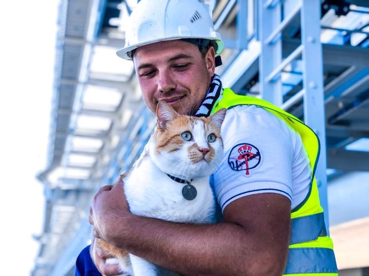 Подержать кота - это честь и награда! Фото: кот Моста/VK