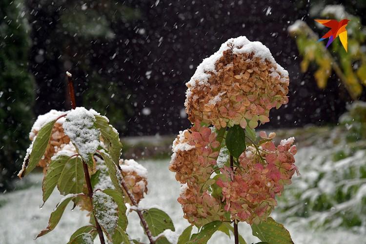 Сегодня мокрый снег добавит ощущения приближающейся зимы
