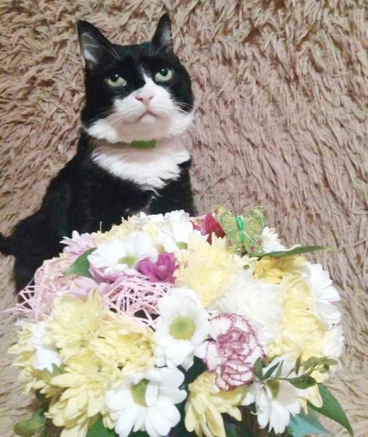 «Лучше бы купили кошачью мяту». Фото героев публикации