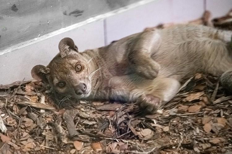 Этих хищников напрасно считают вредителями. Фото: Новосибирский зоопарк.