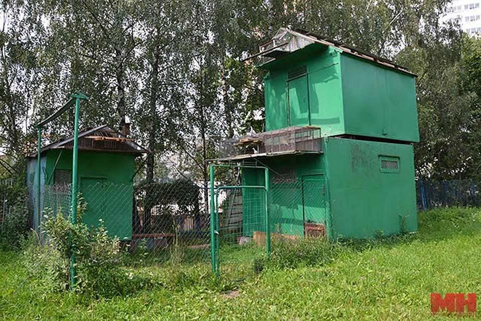 Голубятня Добровольского находится во дворах на улице Янки Мавра. Фото: minsknews.by