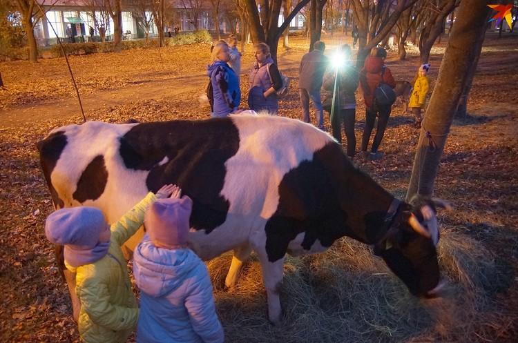 Корову даже в контактном зоопарке за деньги не потрогаешь