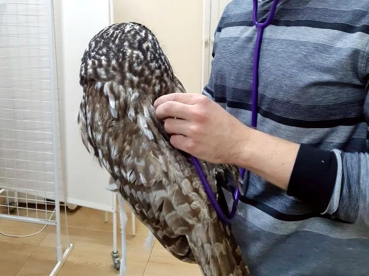 Птица прошла специальный курс лечения, для нее был составлен насыщенный рацион