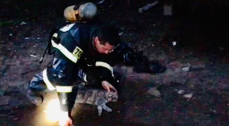 Спасатели вытащили из дома кота, животное удалось спасти Фото: кадр с видео ГУ МЧС России по Тверской области