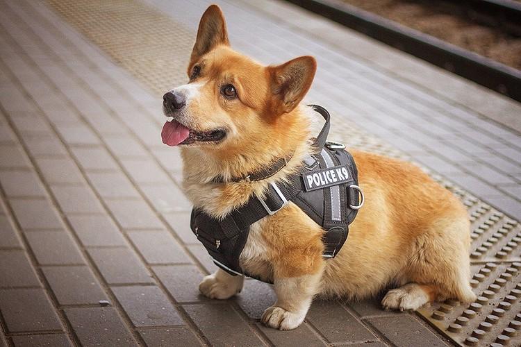 Утром 14 ноября малыш выложил новый пост и фотографию в новой полицейской форме