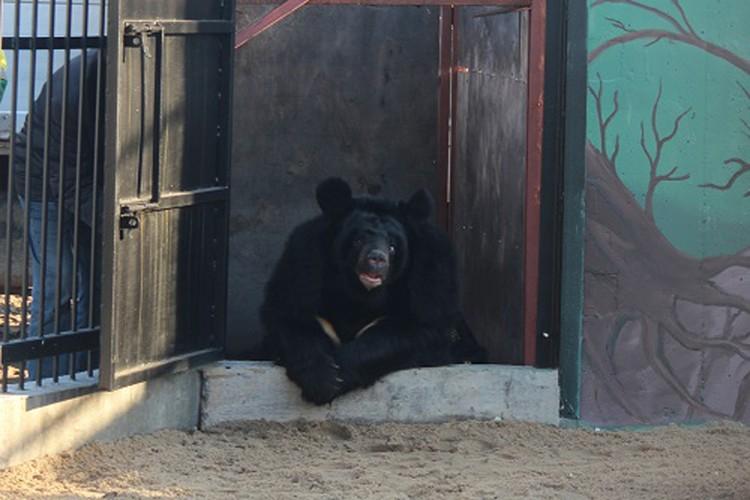 По медвежьим меркам в свои 22 года Даша считается бабушкой.