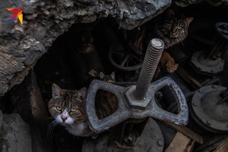 Кошки спасаются от холода в теплотрассе в Усть-Омчуге.