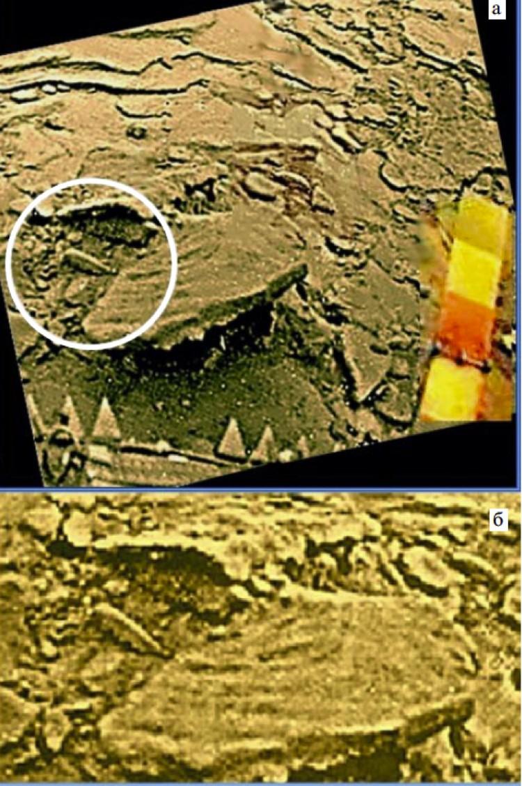 Каракатица, обитающая на Венере.