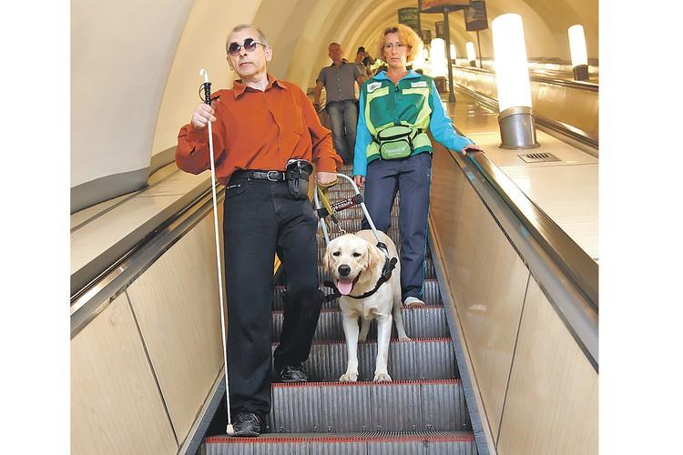 «Это мои глаза и полноценный член семьи» - так называют сами незрячие люди собак-проводников.