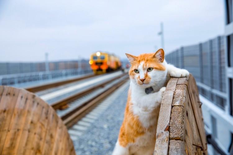 Прораб любит дисциплину и порядок. Фото: кот Мостик/VK