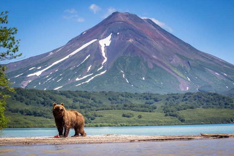 На Камчатке действительно много медведей, но в городе их не увидишь