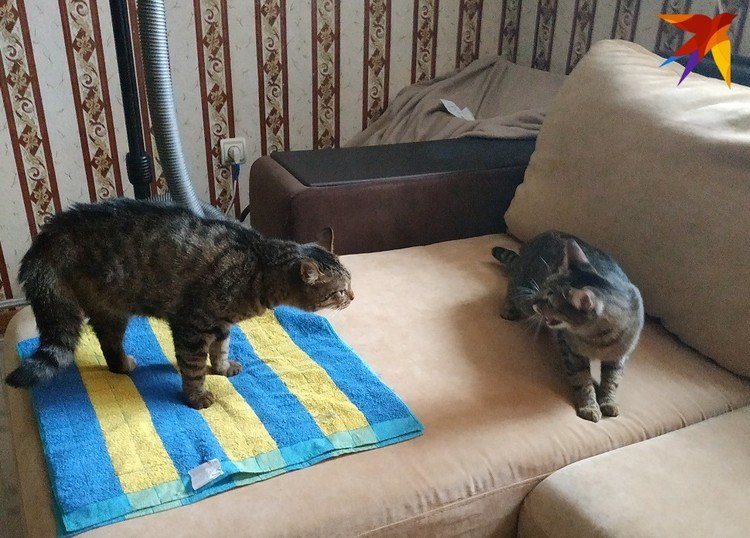 Кошка Мара единственная пока не рада Липтону