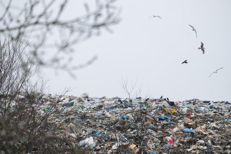 Основная проблема, отмечают эксперты - в том, что в Ленобласти просто нет возможности точно оценить объемы мусора, который завозится из Санкт-Петербурга
