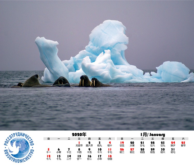 «Хозяева Арктики». Автор фото: ЮЛИЯ КАЛИНИЧЕВА