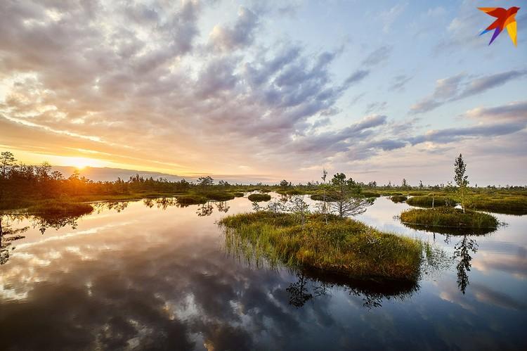 Рассвет над болотом Ельня.